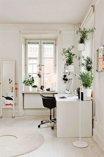 planta blanco