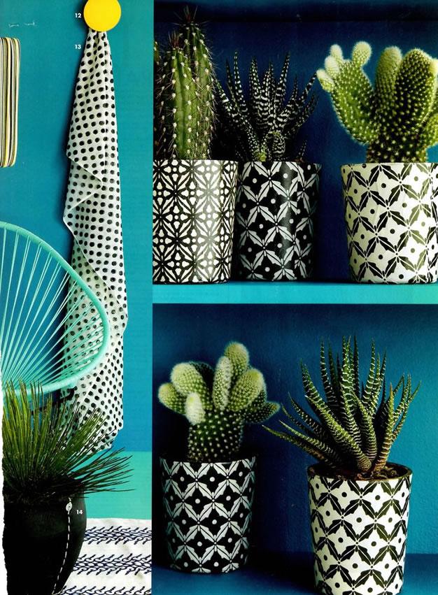 foto-cactus-macetas