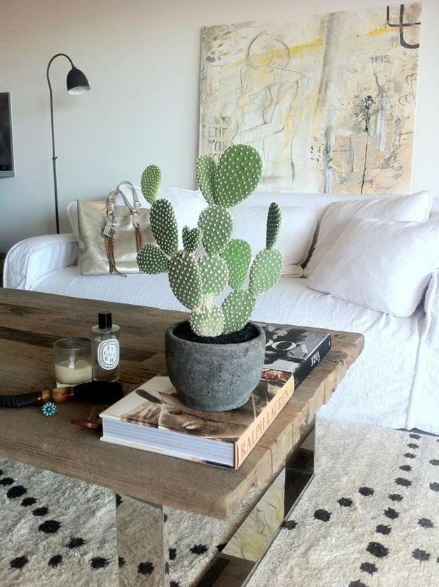 foto-cactus-rustico