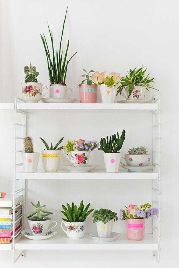 foto-cactus-tazas