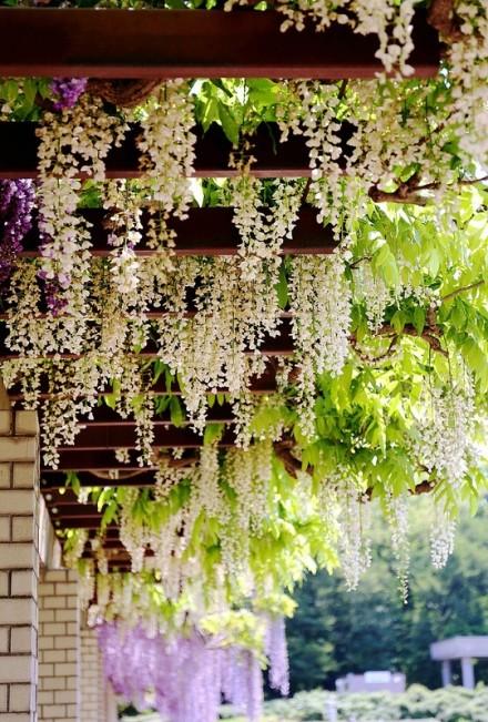 foto-jardin-blanco
