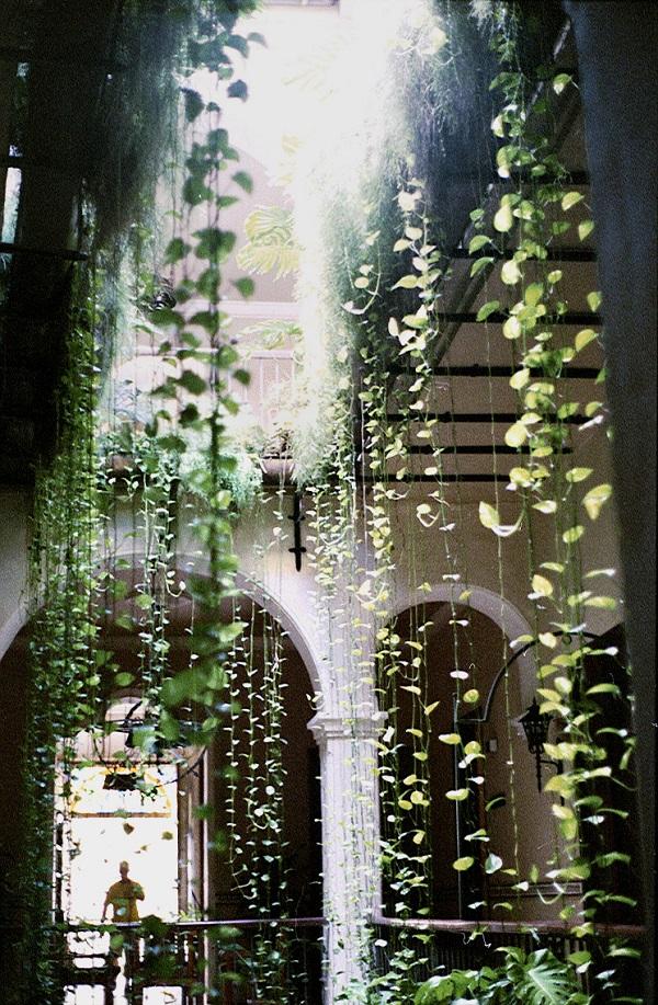 foto-jardin-`potus