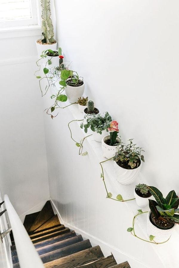 foto-plantas-escalera