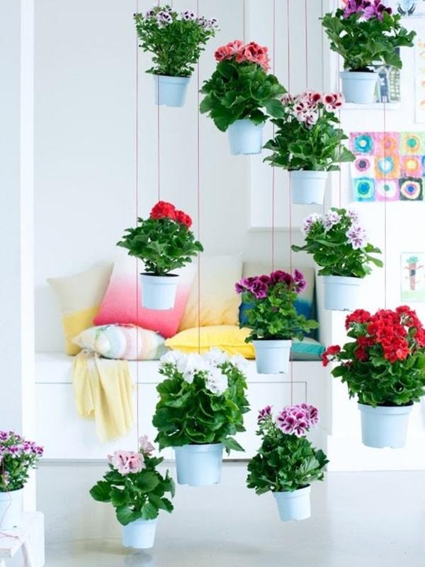 foto-plantas-techo