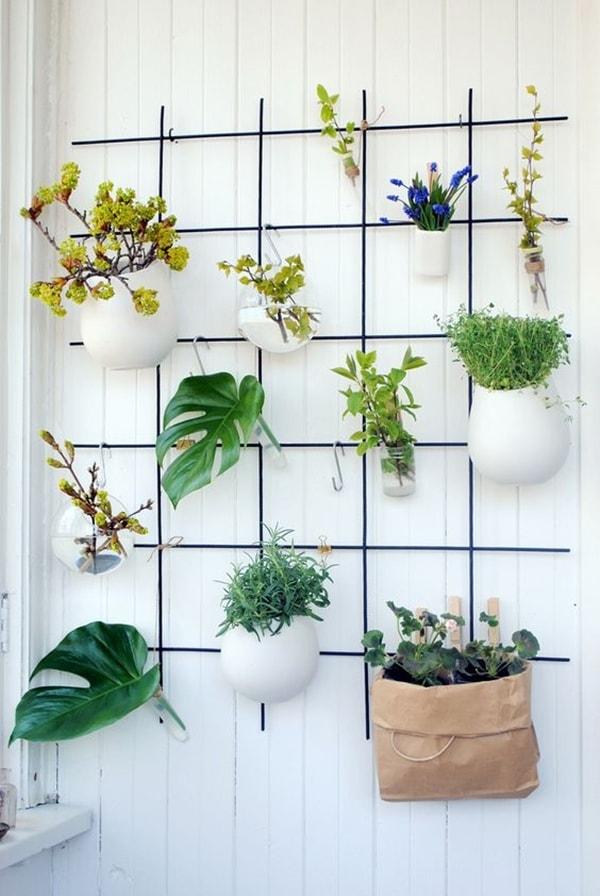 foto-plantas-vertical